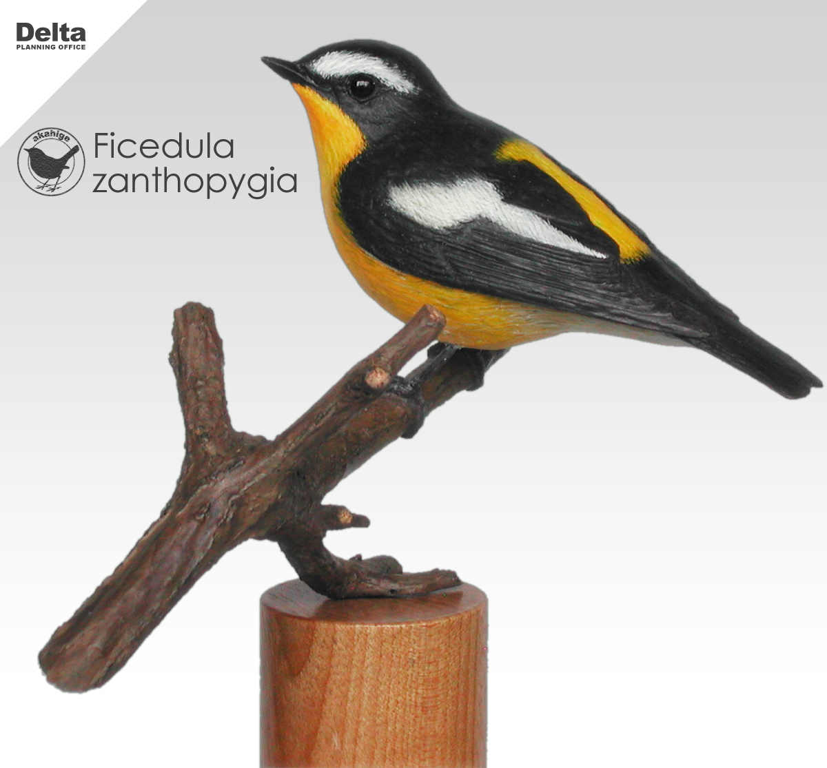 マミジロキビタキ Yellow-rumped Flycatcher Ficedula_zanthopygia